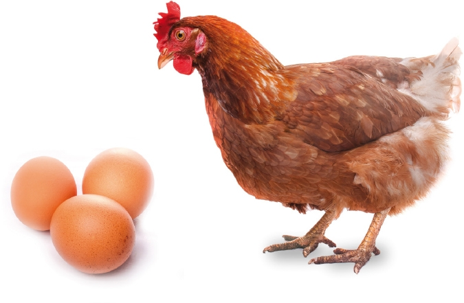 """""""Le anatre depongono le uova in silenzio. Le galline invece schiamazzano impazzite. Quale è la conseguenza? Tutto il mondo mangia uova di gallina."""" - Henry Ford"""